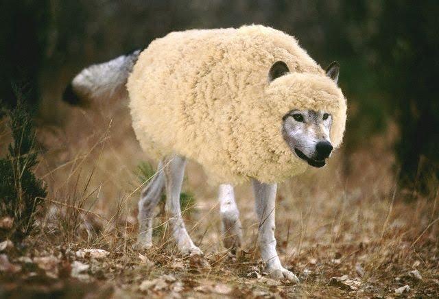 lobo em pele de ovelha